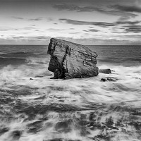 Buy canvas prints of Charlies Garden, Collywell Bay by Tom Hibberd