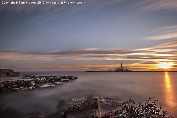 Sunrise at St Mary's Lighthouse Canvas print by Tom Hibberd