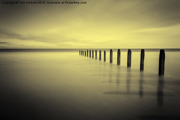 Golden tranquility Canvas print by Tom Hibberd