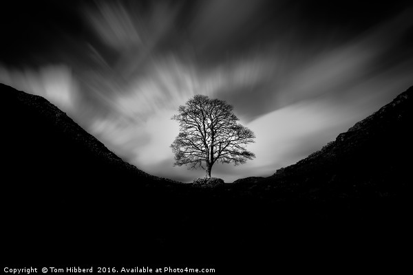 Sycamore Gap and the lonely tree Canvas print by Tom Hibberd