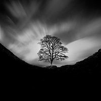 Buy canvas prints of Sycamore Gap and the lonely tree by Tom Hibberd