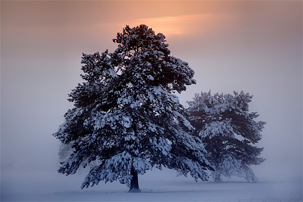 Snow Trees Canvas print by sam moore