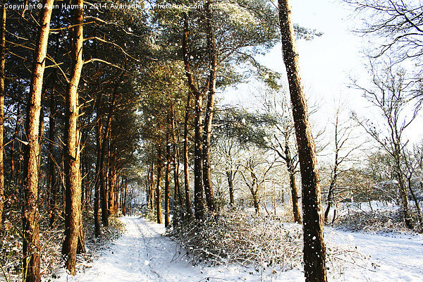 Forest Snow Scene Canvas print by Alan Harman