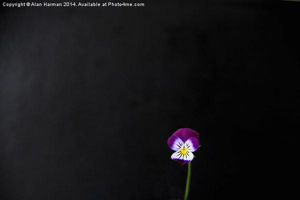 Violet Flower Canvas print by Alan Harman