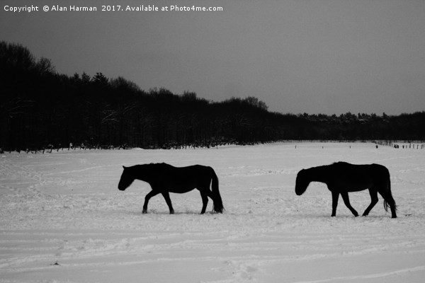 Horses On Snow Canvas print by Alan Harman