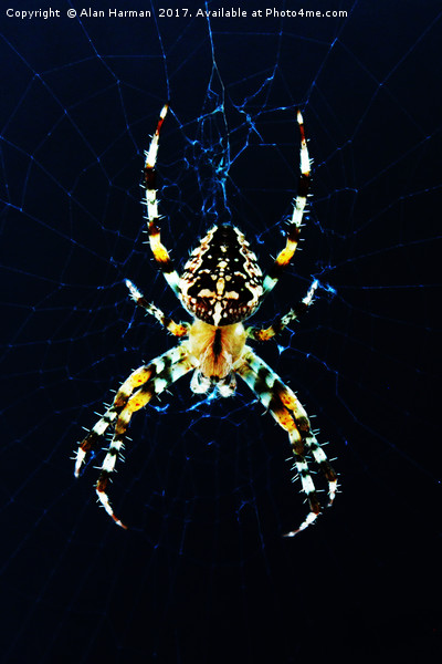 European Garden Spider Canvas print by Alan Harman