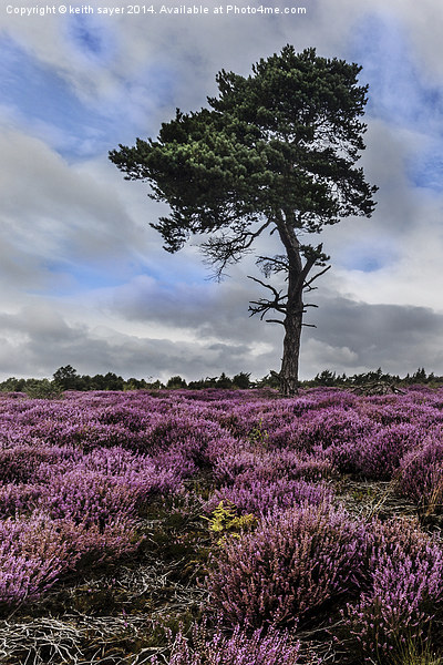 Alone In The Heather Canvas print by keith sayer