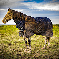 Buy canvas prints of Standing Proud by keith sayer