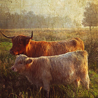 Buy canvas prints of Highlanders. Scottish Countryside by Jenny Rainbow