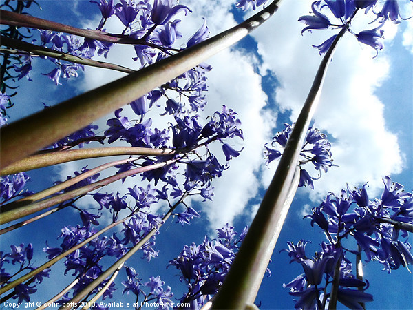 Bluebell trees Canvas Print by colin potts