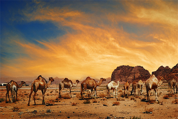 Camels in Wadi Rum Canvas print by Jelena Jovanovic
