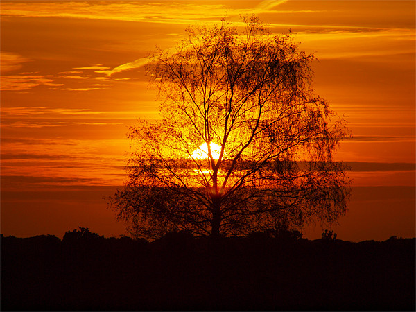 Sping Sunset in the New Forest Canvas print by Alan Sutton