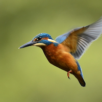 Buy canvas prints of On the wing by Alan Sutton
