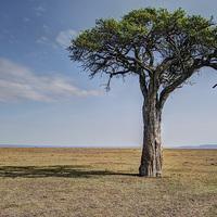 Buy canvas prints of  Maasai Mara by Perry Johnson