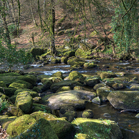 Buy canvas prints of The River Dart near Dartmeet by Rosie Spooner