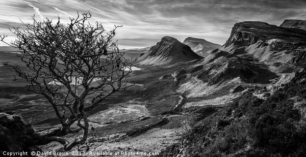 The Quiraing No7 Canvas print by David Brown