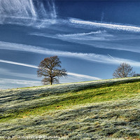 Buy canvas prints of Lonely trees at daybreak by Mike Jennings
