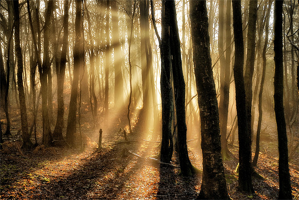 Misty rays Canvas print by Mike Jennings