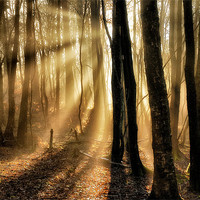 Buy canvas prints of Misty rays by Mike Jennings