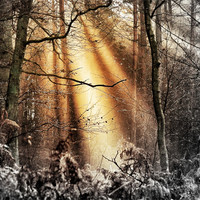 Buy canvas prints of Illumination by Mike Jennings