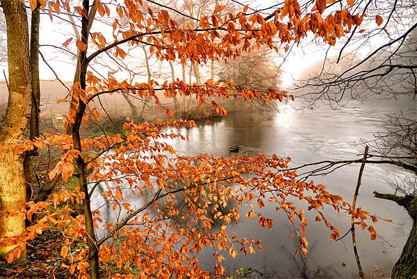A Winter scene Acrylic by Mike Jennings