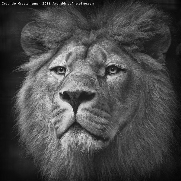 His Majesty Canvas print by peter lennon
