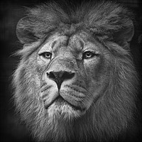 Buy canvas prints of His Majesty by peter lennon