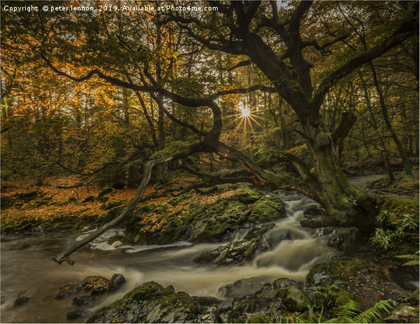 The Enchanting Tree Canvas print by peter lennon