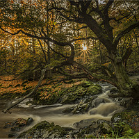 Buy canvas prints of The Enchanting Tree by peter lennon