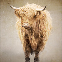 Buy canvas prints of The Highland Cow 1 by Peter Lennon