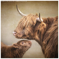 Buy canvas prints of Mother & Baby by Peter Lennon