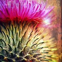Buy canvas prints of  Thistle Be The Prickly One by Anne Macdonald