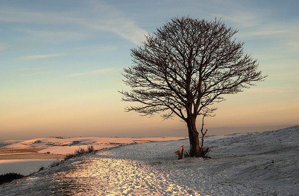 The Nowhere Tree Canvas Print by Malcolm McHugh