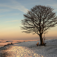 Buy canvas prints of The Nowhere Tree by Malcolm McHugh