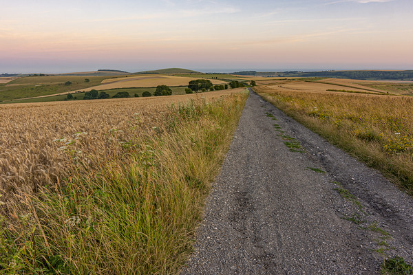 South Downs Way after sunset Canvas Print by Malcolm McHugh