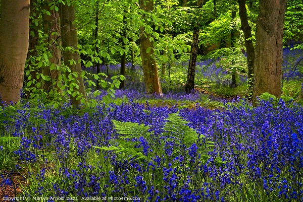 Deep in the Bluebell Wood Print by Martyn Arnold