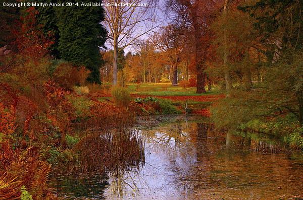 Autumns Golden Colour Canvas print by Martyn Arnold