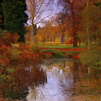 Buy canvas prints of Autumns Golden Colour by Martyn Arnold