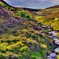 Buy canvas prints of Moorland Stream in the Yorkshire Dales by Martyn Arnold
