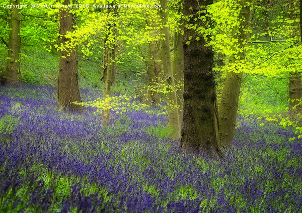 Spring Bluebell Wood Canvas print by Martyn Arnold