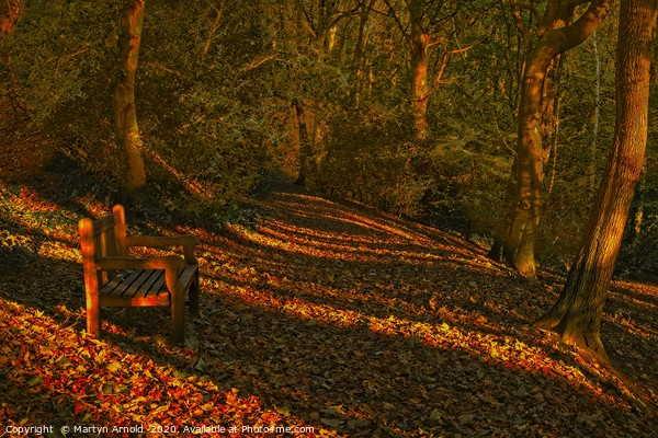 An Autumn Woodland Walk Canvas Print by Martyn Arnold