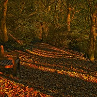 Buy canvas prints of An Autumn Woodland Walk by Martyn Arnold