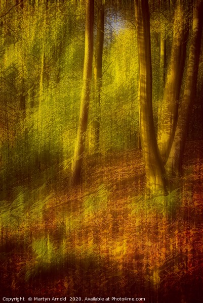 Impression of an Autumn Woodland Canvas Print by Martyn Arnold