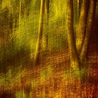 Buy canvas prints of Impression of an Autumn Woodland by Martyn Arnold