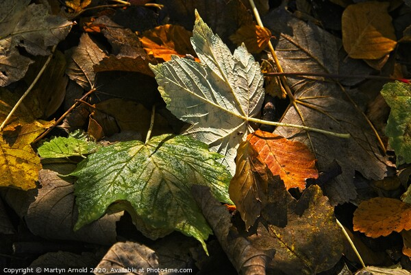 Autumn Leaves Canvas Print by Martyn Arnold