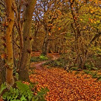 Buy canvas prints of Autumn Wood by Martyn Arnold