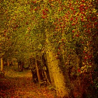 Buy canvas prints of Artistic Autumn Woodland by Martyn Arnold