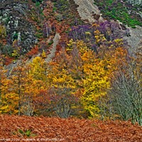 Buy canvas prints of Natures Autumn Colours by Martyn Arnold