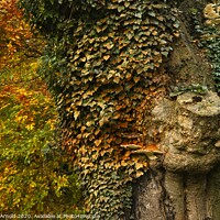 Buy canvas prints of Autumn's Colours by Martyn Arnold