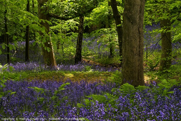 Durham Bluebell Wood Print by Martyn Arnold